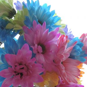 tinted flowers daisies